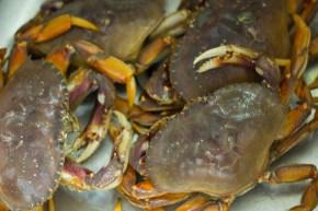 I got crabs! (the joke never growsold…)