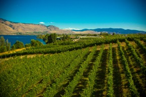 Exposing my palate to the South Okanagan