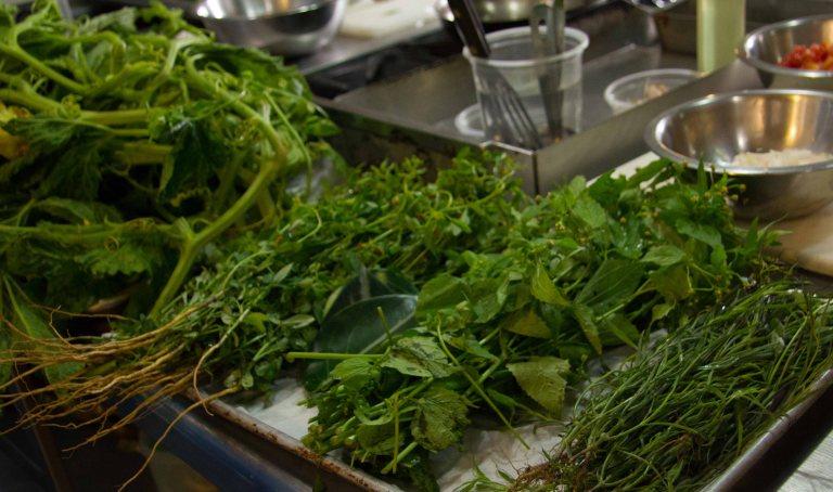 Herbs for the soap de guias.