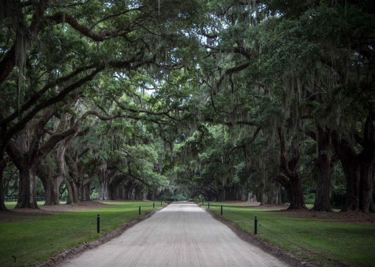 Driving into the Boon Hall Plantation