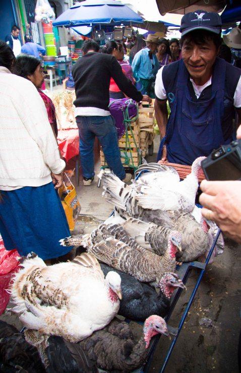 Oaxaca Ocotlan turkey