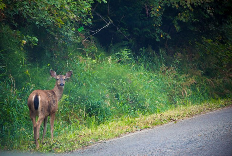 And of course there was a deer at the side of the road.