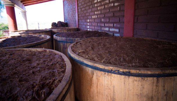 Barrels agave mezcal oaxaca matatlan
