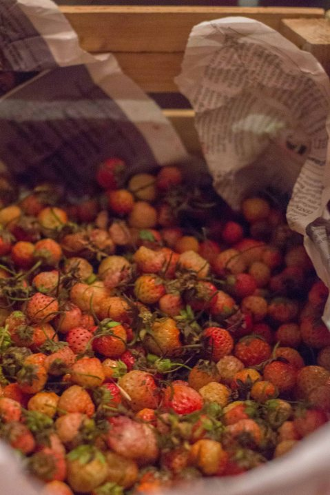 """El Destilado Oaxaca wild strawberries"""