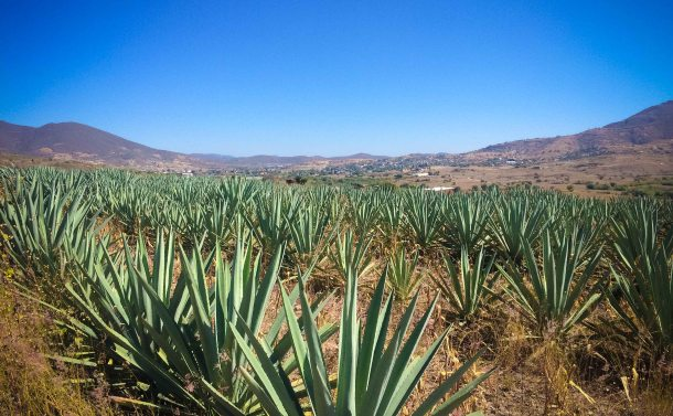 San Pablo Guila Oaxaca