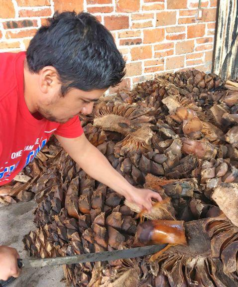 matatlan-mezcal-baked-agave