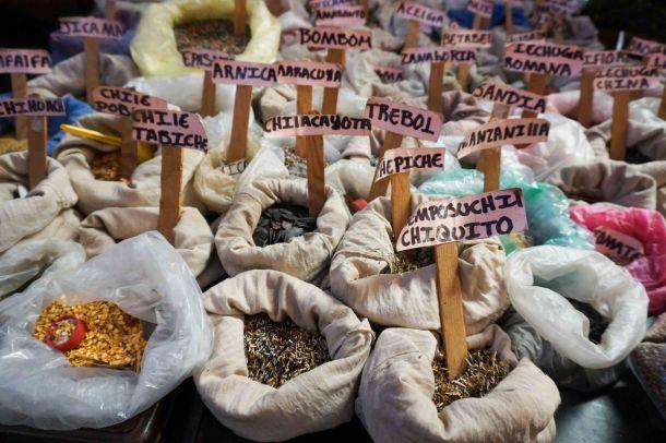 Tlacaloula seeds