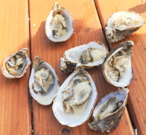 Taylors shellfish chuckanut oysters