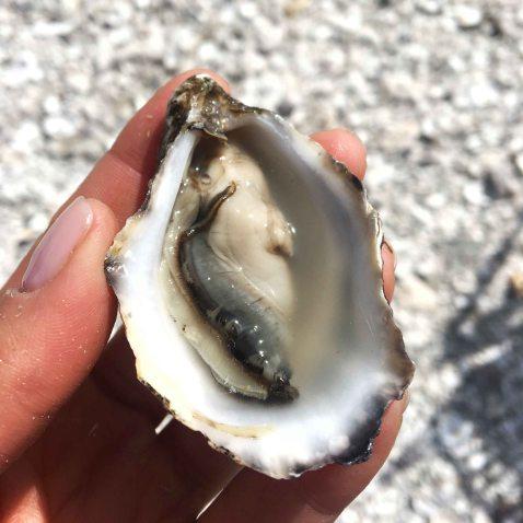 Taylors shellfish shigoku