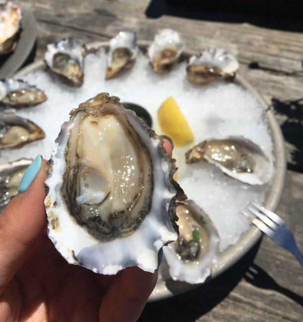 Hog Island oyster