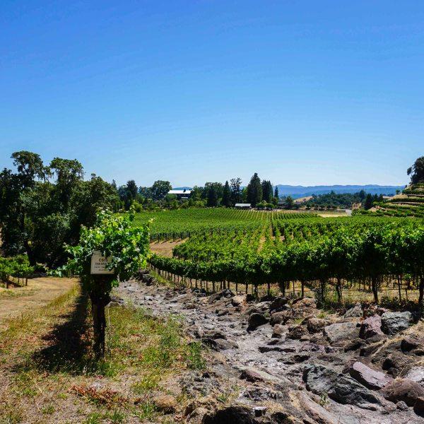 Skipstone ranch vineyard