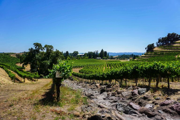 Skipstone ranch vineyard