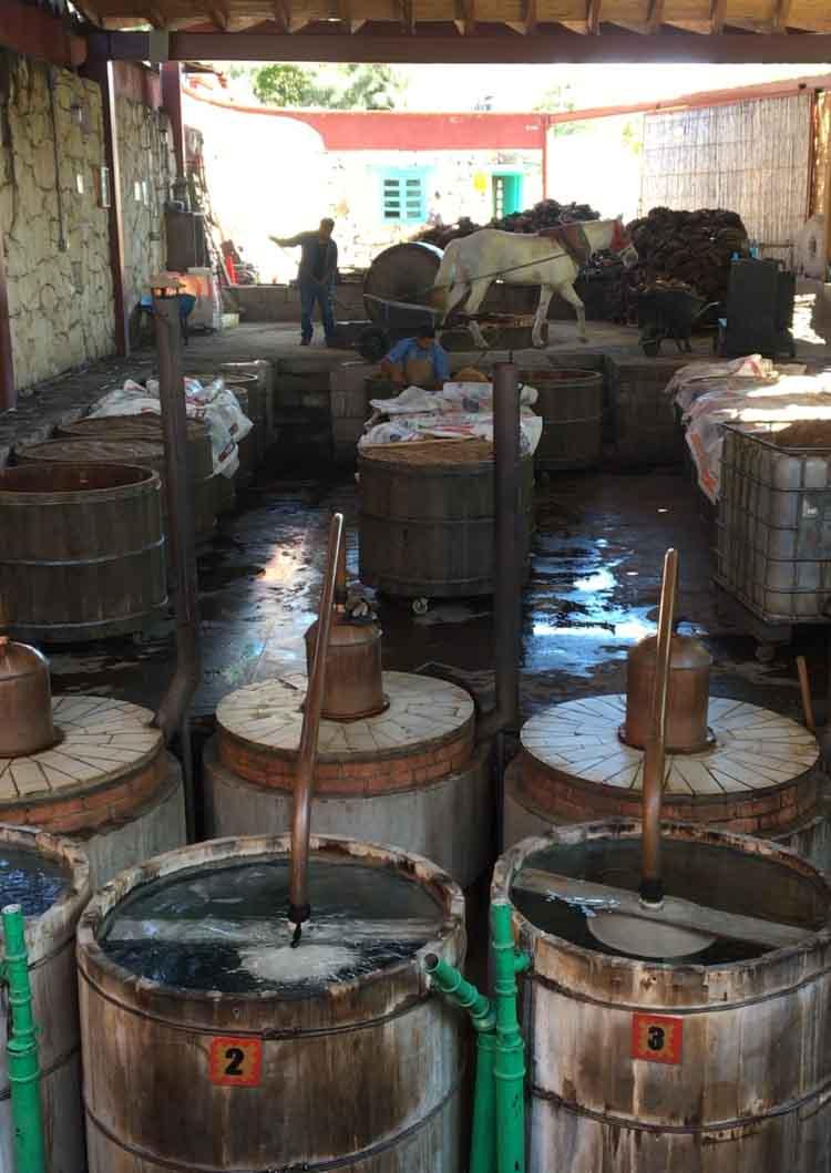 Los Danzantes mezcal distillery