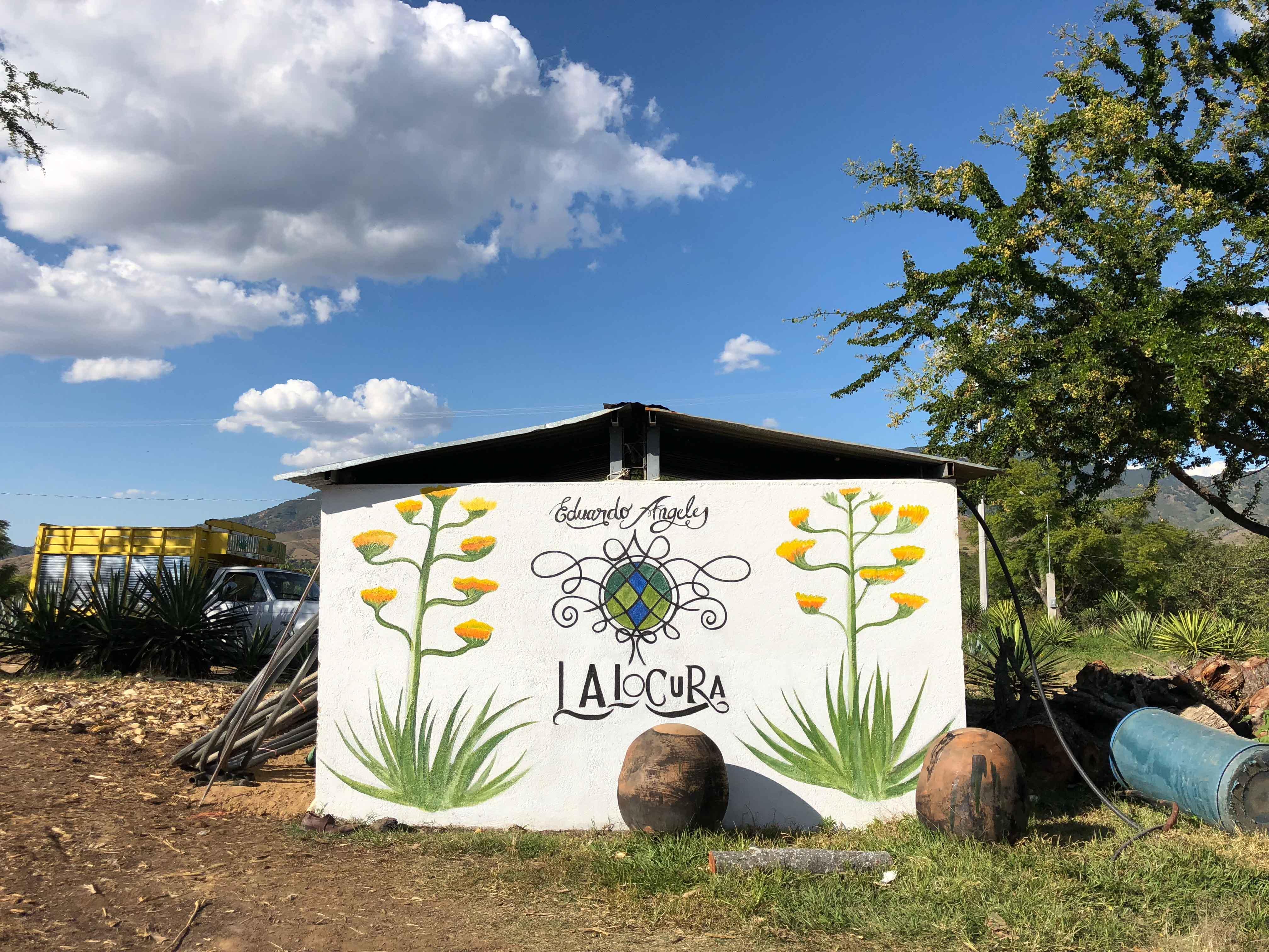 Lalocura mezcal minas Oaxaca