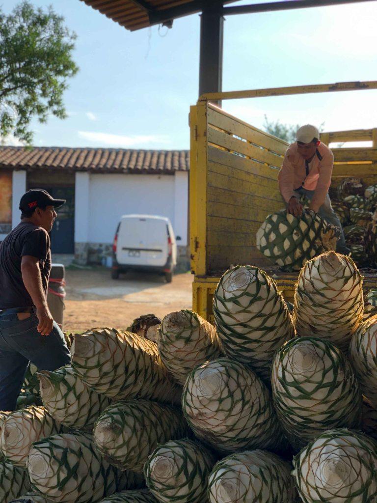 Lalocura mezcal Oaxaca barril